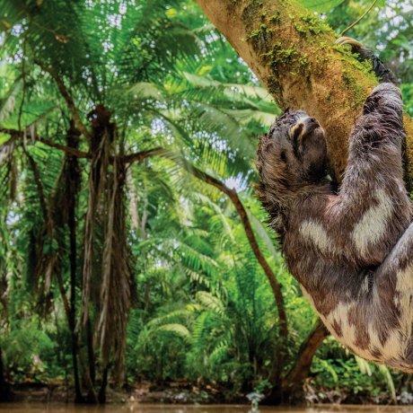 Por que contribuir com a Amazônia?