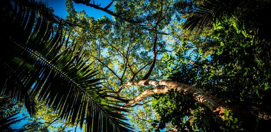 O que é o Amazonia Live?