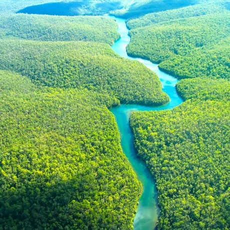 A maior restauração florestal na Amazônia