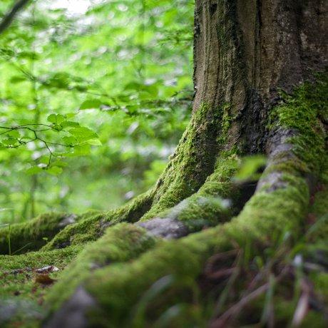 +44 mil árvores garantidas com o leilão