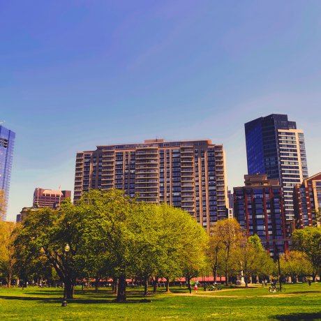 Trees in cities: public health measure
