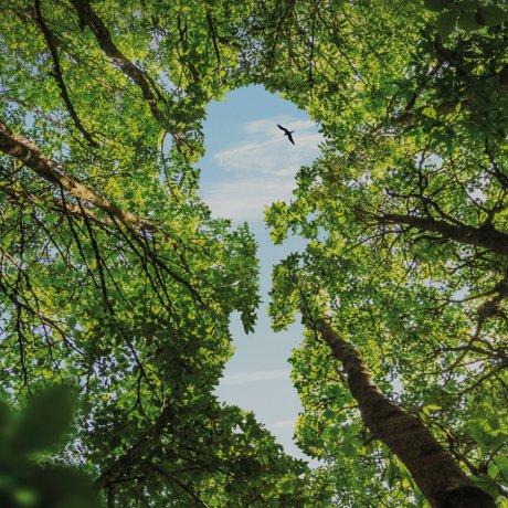 Homage to Amazonia Live: Conservation Hero Award