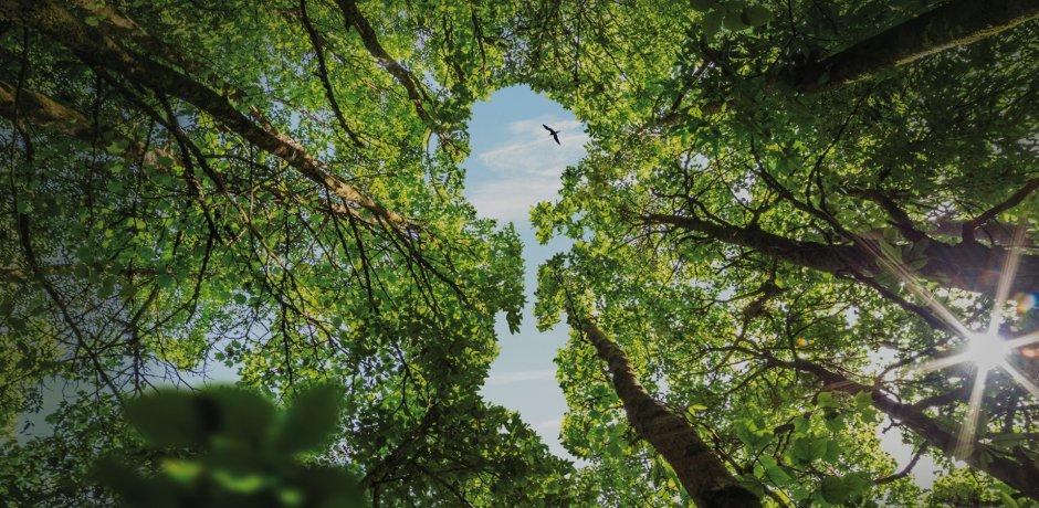 Homenagem ao Amazonia Live: Conservation Hero Award